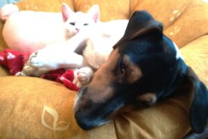 Kitten and jack russell terrier friends