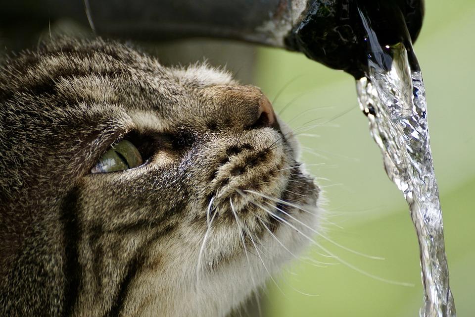 Macska szökőkút
